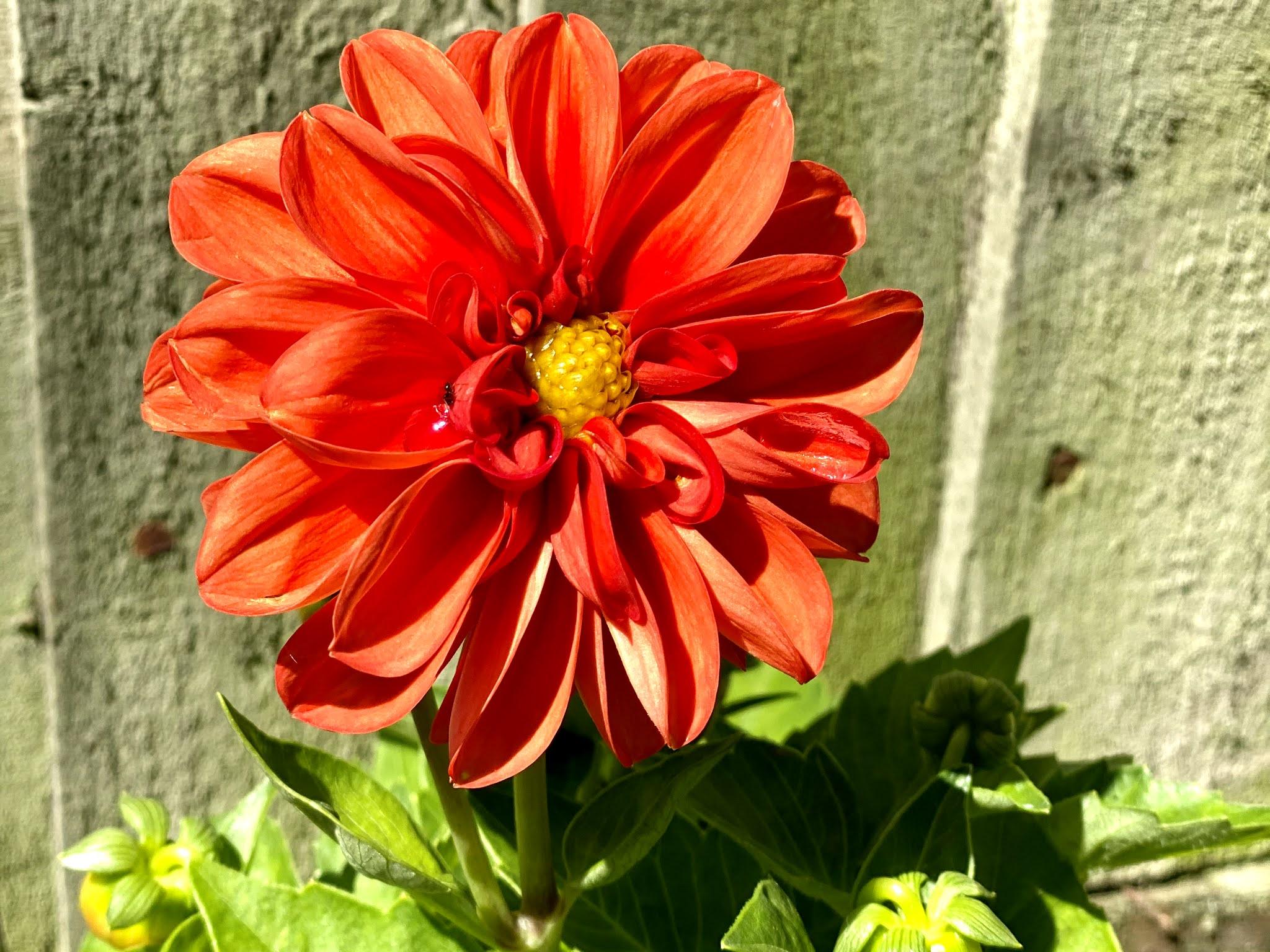 A pretty orange flower in the garden