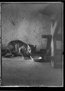 Katze am Milchschälchen - um 1910