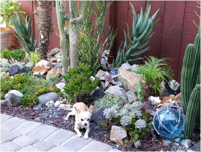 Liven Things Up Nadia's Ocean themed succulent garden in California ~ 26081049_Sukkulenten Winterhart Steingarten