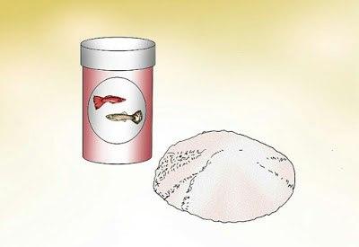 Gambar Makanan yang Bagus untuk Ikan Guppy