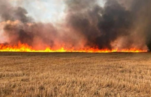 حريق يدمر 120 هكتارا من محاصيل الحبوب