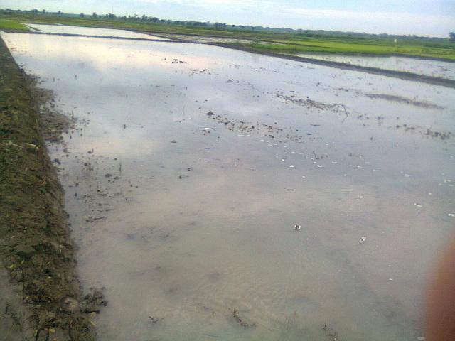 Bagaimana Pupuk dan Pestisida Merusak Ekosistem Sungai?