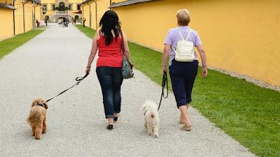 Furry pets walking outdoors