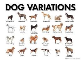 Jenis-Jenis Anjing Ras di Dunia