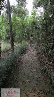 Mata-Kucing-Hutan-Wisata-batam-trek-jalan