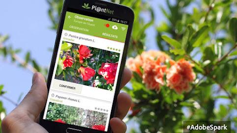 PlantNet, app para identificar las plantas con la cámara de tu telefono