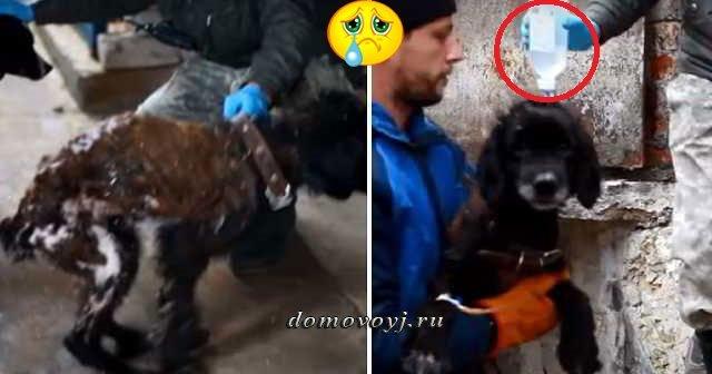Выживший узник «собачьего концлагеря» в Нижнем Новгороде нашел свою хозяйку… Видео спасения «узников лагеря»….