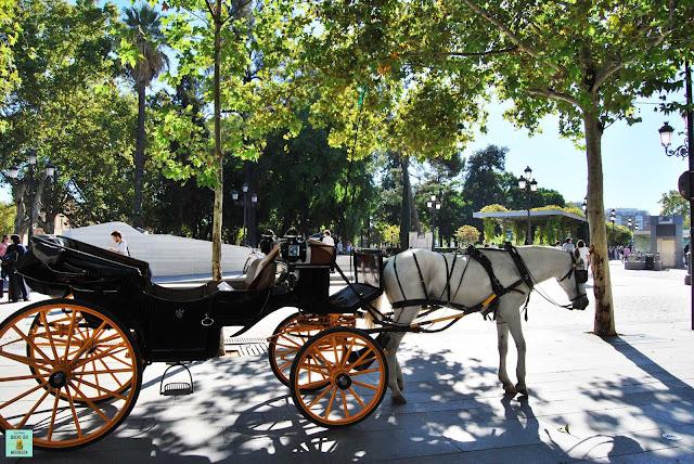 Carrozas de caballos en Sevilla