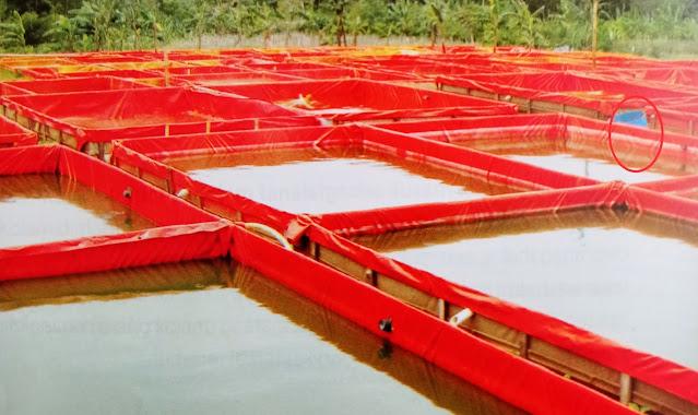 Kolam terpal untuk ikan konsumsi air tawar