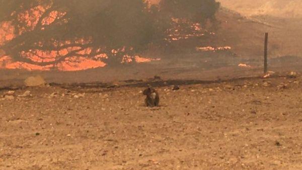 Incendios en Australia habrían provocado la muerte de mil millones de animales