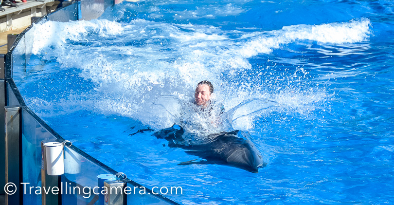 In this photograph you can clearing see one of the Sea World employee riding over Dolphin. This was one of the simplistic trick. Some of these coaches were standing on Dolphins while they were swimming very fast.