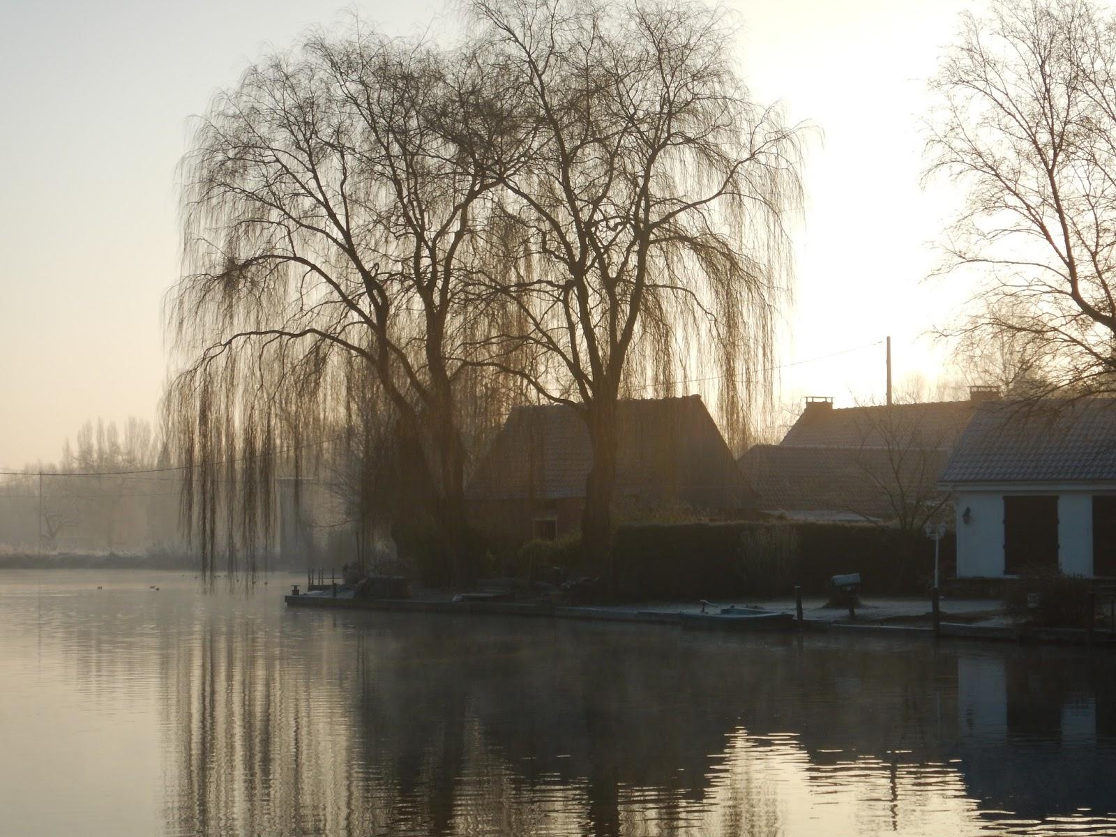 Rando Wardrecques: Le Marais De Tilques Jeudi 19 Janvier 2017