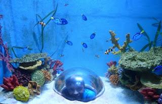 Sea Life Benalmádena.