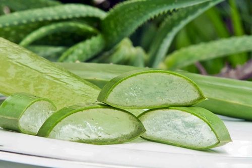 The Benefits of Aloe Vera as a Face Mask and How to Make it