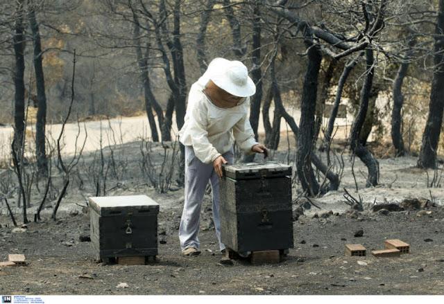 Τεράστια η οικολογική καταστροφή στο πευκοδάσος της Εύβοιας
