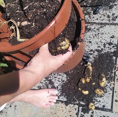 Grow Your Own Potatoes Planter