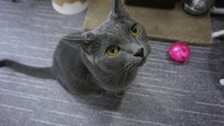 Gato con juguete Amante de los gatos