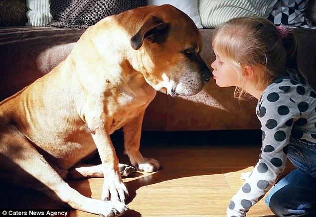 Giây phút vĩnh biệt đầy xúc động của cô bé 6 tuổi với chú chó mù và điếc