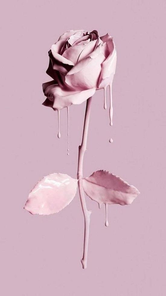 Wallpaper gambar bunga mawar