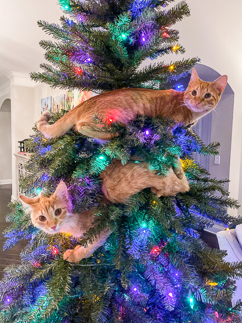 cats in the christmas tree
