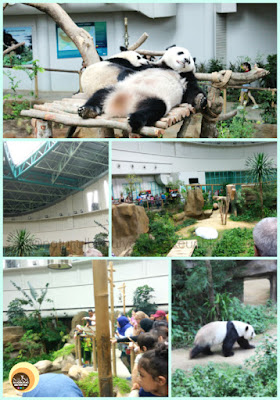 Giant Panda Convention Centre, Zoo Negara, Kuala lumpur, Malaysia. Best things to do in National Zoo, KL