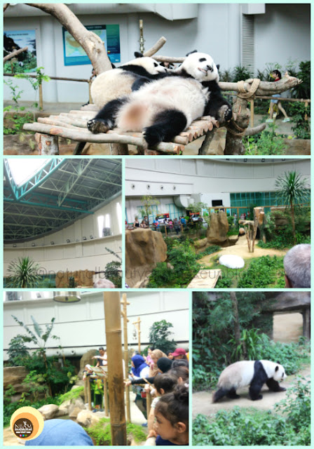 Giant Panda Convention Centre, Zoo Negara, Kuala lumpur, Malaysia. Best things to do in National Zoo, KL