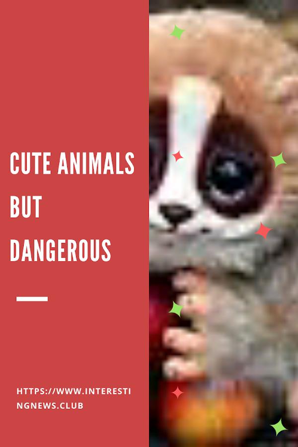 Top cute animals but dangerous