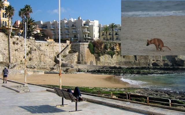 FALTA DE CIVISMO. Donos põem canídeos a defecar nos areais das praias e não limpam!