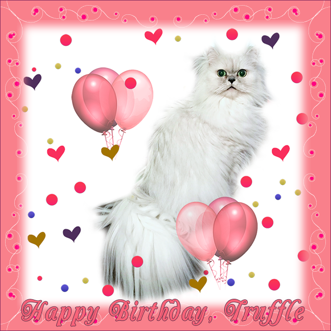 Truffle's 7th Birthday Graphic