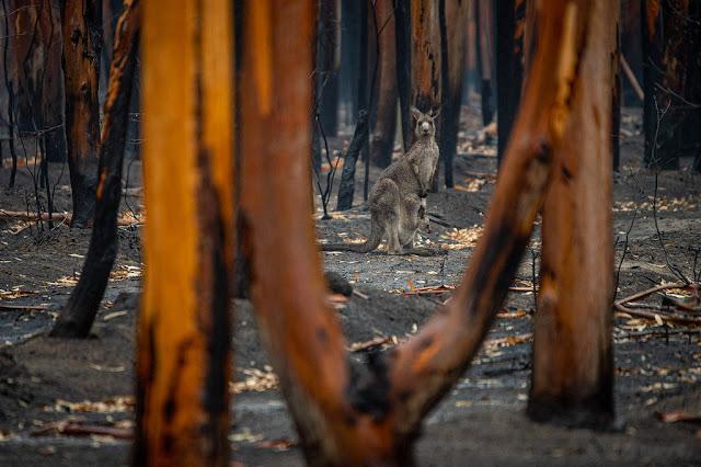 Los incendios forestales en Australia son un muestra más del avance del cambio climático.Unsplash/Jo-Anne McArthur
