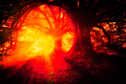 Noel Langley Edgar Cayce a reinkarnációról tartalom