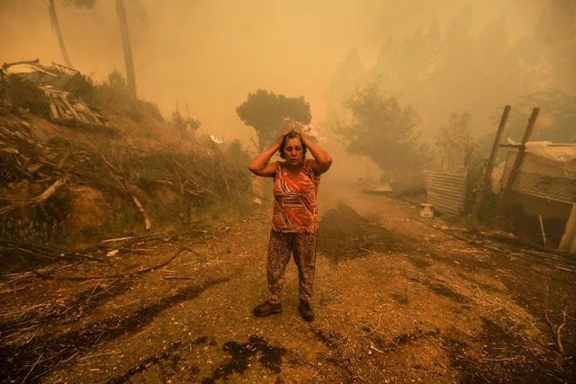 Pożary lasów w Portugalii od wielu lat to celowe działanie mafii?