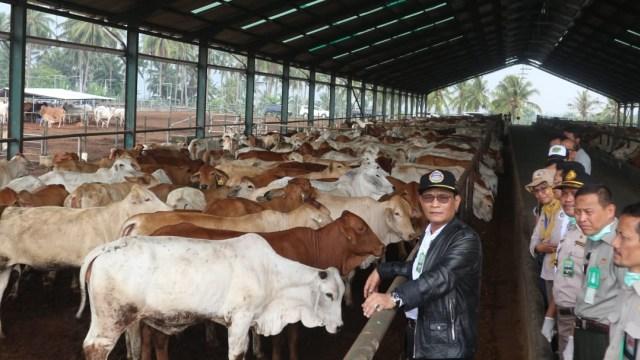 Pemerintah Akan Impor 550ribu Sapi Bakalan dan 60ribu Ton Daging Kerbau Tahun Depan