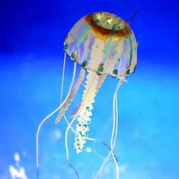 जेलीफिश, छत्री, Jellyfish name in Marathi