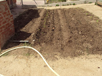 distribución cultivos en parcela huerto escolar