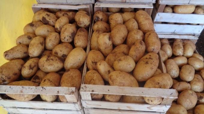 Ljubuški krumpir izvoze Čapljinci