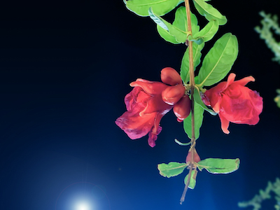 Red flowers at night stock image