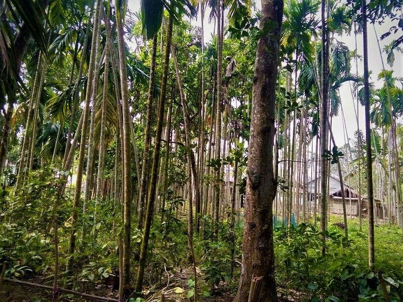 assam village image, Assam village photography