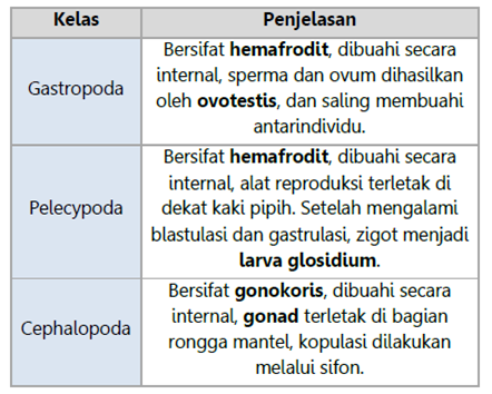 Sistem Reproduksi Mollusca