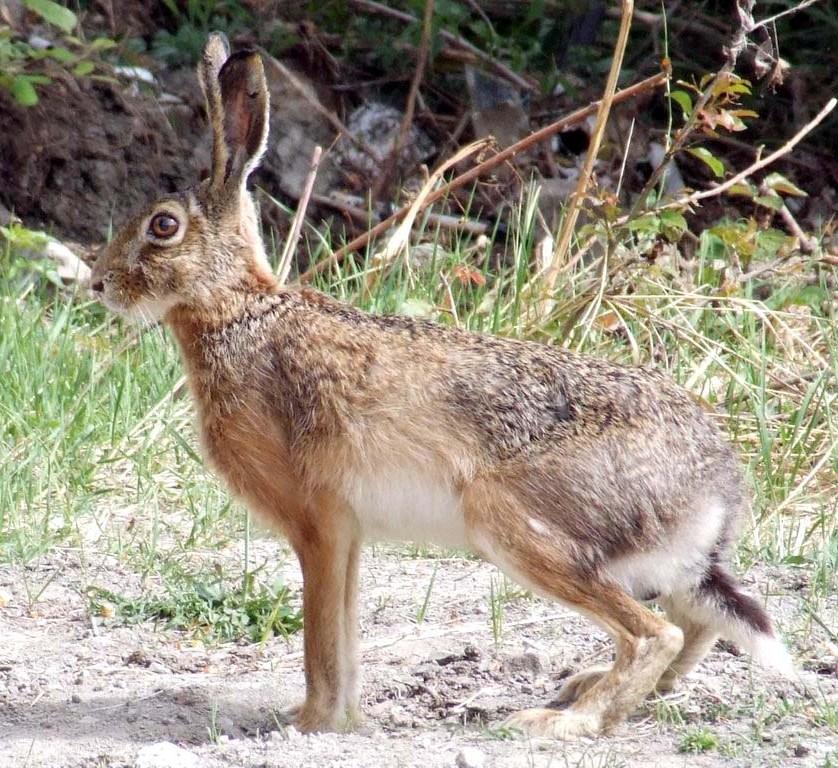 Laghetto di basiglio fauna del laghetto di basiglio for Animali da laghetto