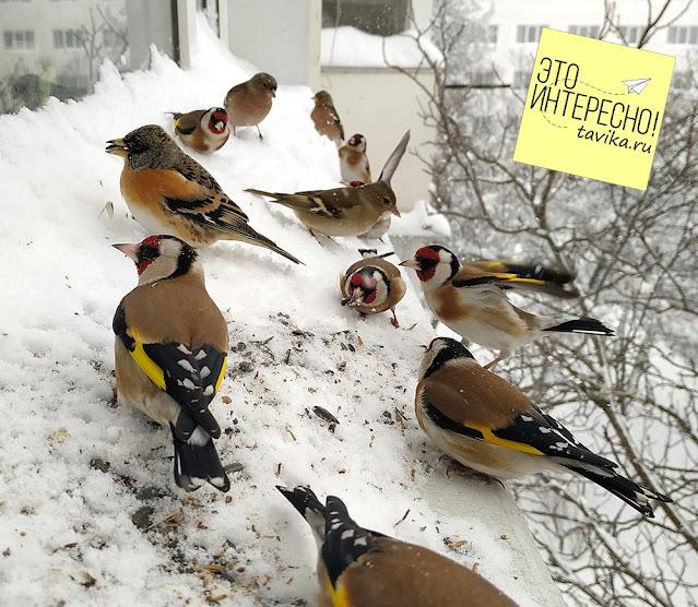 Птицы на кормушке, Симферополь