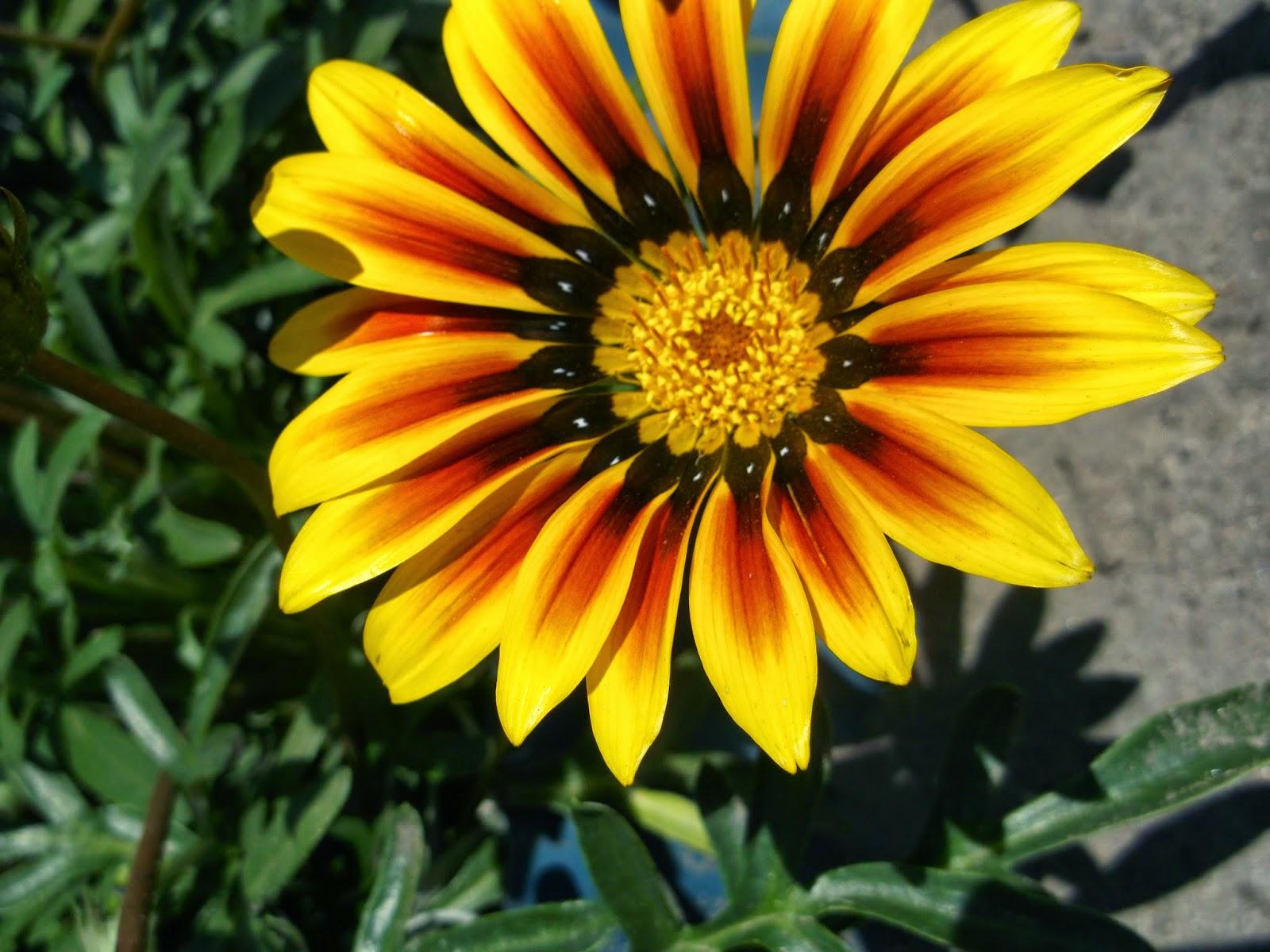 Все садовые цветы фото