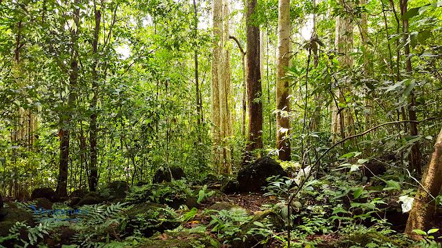 Check in Cây Tung Cổ Thụ và những cây rừng to lớn khác
