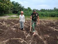 Babinsa Koramil 01/Sgl  Bantu Petani Tanam Jagung di Lahan Milik Ibu Mariana Desa Muliorejo