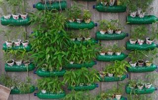 cara menanam hidroponik sederhana dengan botol bekas