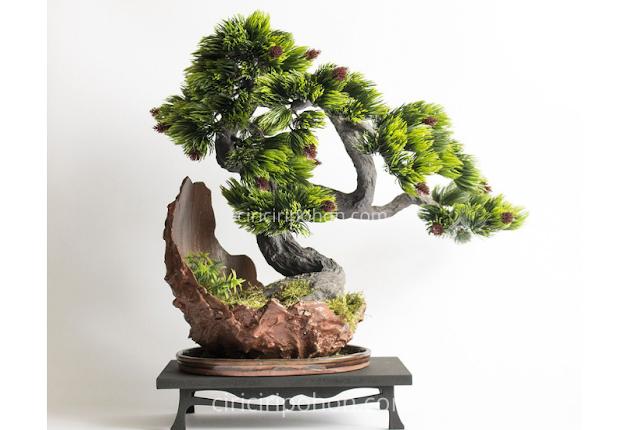 Ciri Ciri Pohon Bonsai