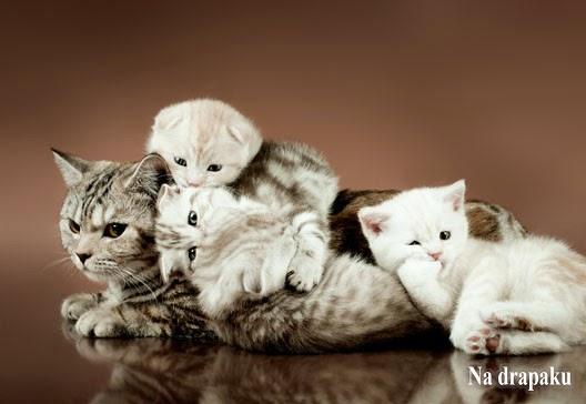 Czy kotka musi mieć małe?