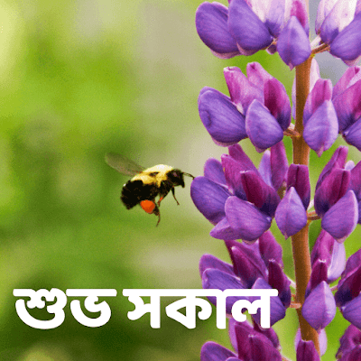 Bengali Good morning wishes