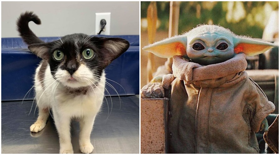 Meet The Special Kitty That Looks Like Baby Yoda