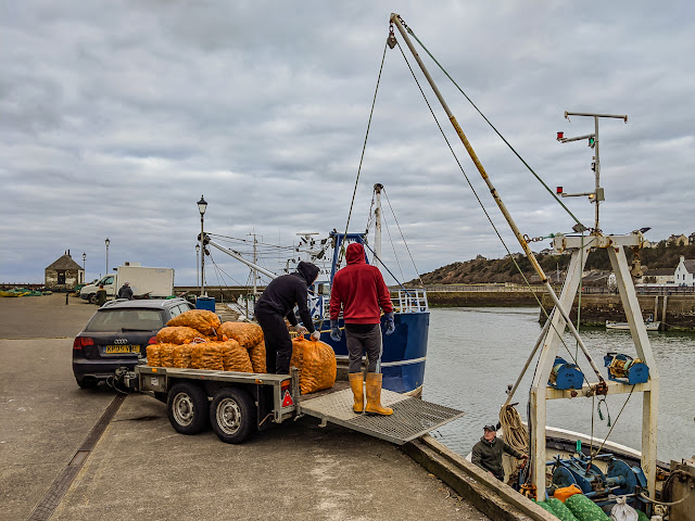 Photo of Silver Stream landing its catch of whelks at Maryport Harbour